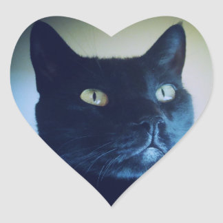I Am Cat Sticker