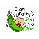 I am Grammy's Pea In A Pod Postcard