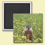 I am Groundhog 2 Inch Square Magnet