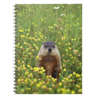 I am Groundhog Notebook