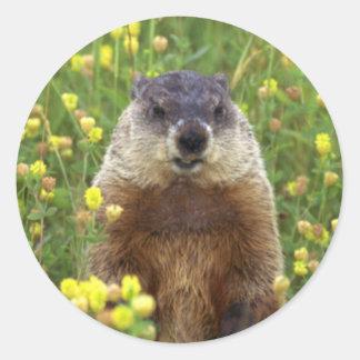I am Groundhog Sticker