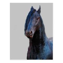 I am horse postcard