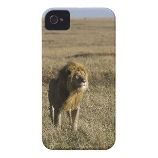 I am King, Hear me Roar iPhone 4 Covers