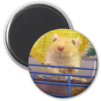 I am not a mouse 2 inch round magnet
