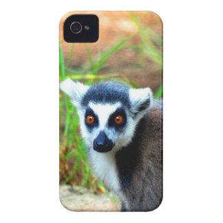 I am small but cute Catta Lemur iPhone 4 Covers