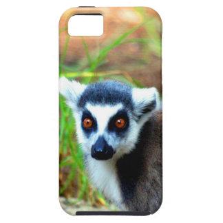 I am small but cute Catta Lemur iPhone 5 Cases