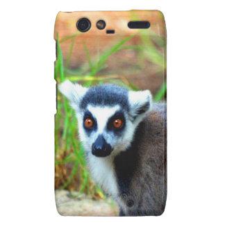 I am small but cute Catta Lemur Droid RAZR Cover