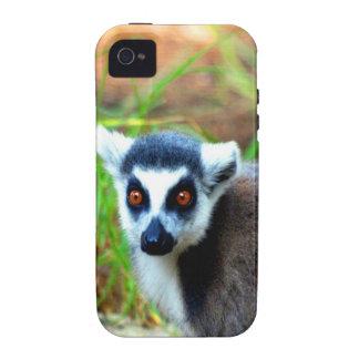 I am small but cute Catta Lemur iPhone 4/4S Case