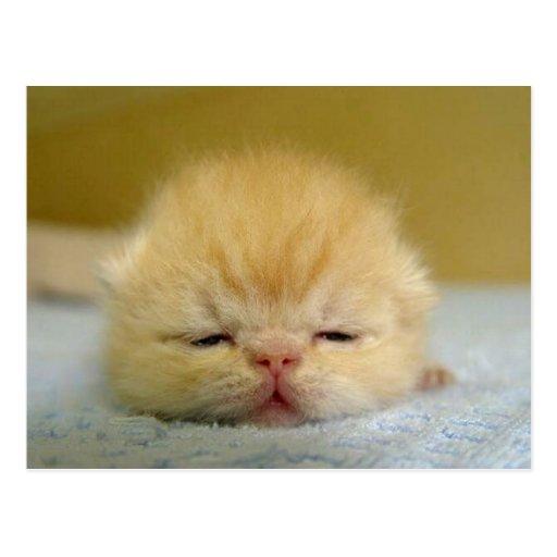 i am so sleepy baby! postcard