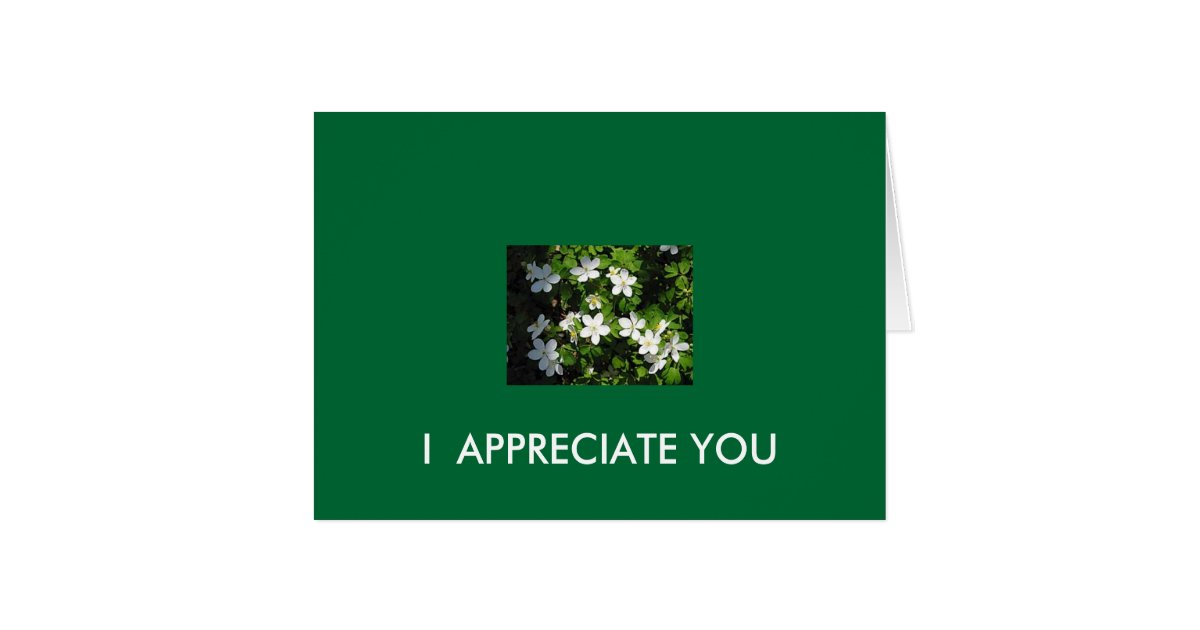 I Appreciate You Card Zazzle