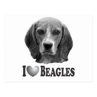 I beagles del corazón con el retrato del beagle tarjetas postales