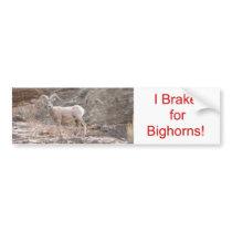 I Brake for Bighorns! Bumper Sticker