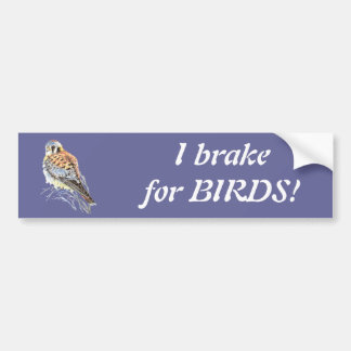 I brake for Birds - Birding Kestrel Watercolor Bumper Sticker