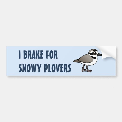 I Brake for Snowy Plovers Bumper Stickers