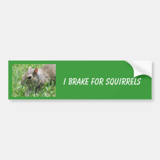"I Brake for Squirrels featuring ""Clicker"" Car Bumper Sticker"