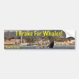 I Brake For Whales Santa Cruz Bumper Sticker