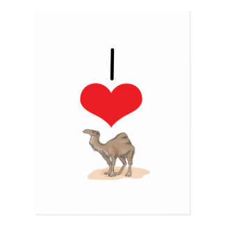 I camellos del corazón amor tarjeta postal