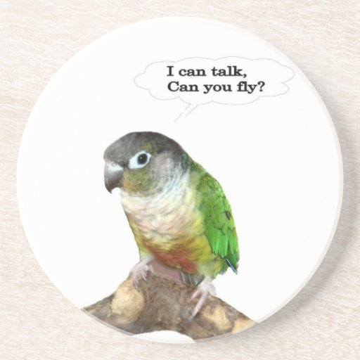 I can talk, can you fly? coasters