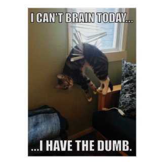 I Can't Brain Today. I Have The Dumb (cat) Poster