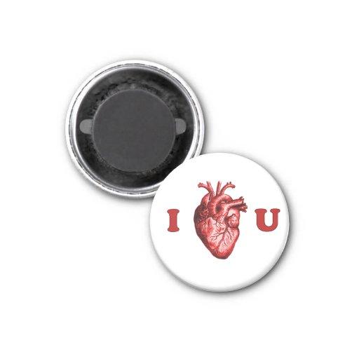 I corazón usted corazón anatómico - blanco y rojo imán redondo 3 cm