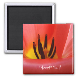 """¡I """"corazón"""" usted! flores ROJAS del tulipán del Imán Cuadrado"""