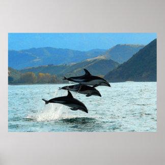 I Delfini 36 x 24 Poster