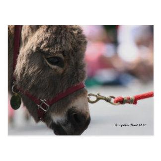 I ♥ Donkeys! Postcard