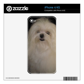 I Don't Do Top Knots MALTESE Skins For The iPhone 4S