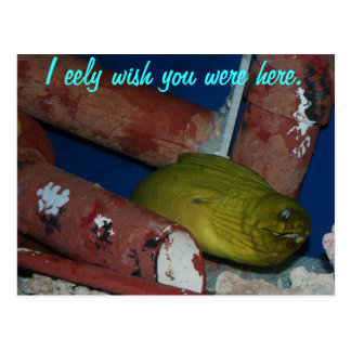I eely wish you were here. postcard