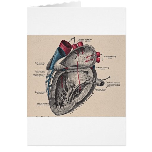 I give you my heart greeting card