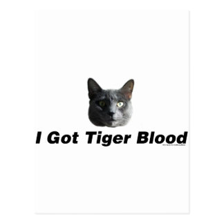 I Got Tiger Blood Postcard