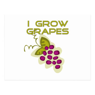 I Grow Grapes Tshirts and Gifts Post Card