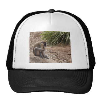 I have an Itch - Spider Monkey Hats