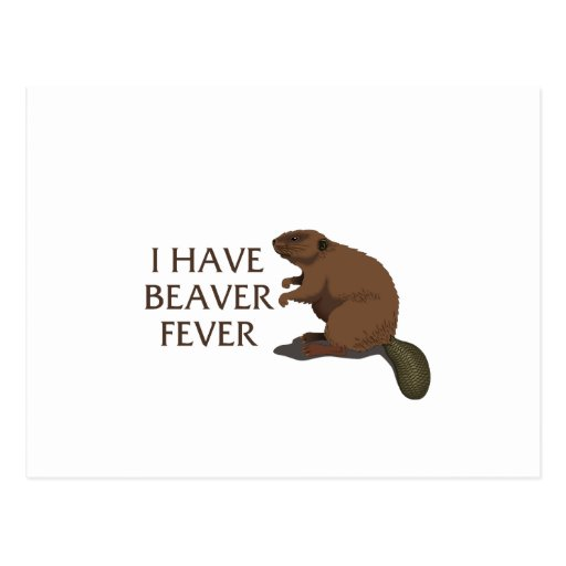 I have Beaver Fever Post Card
