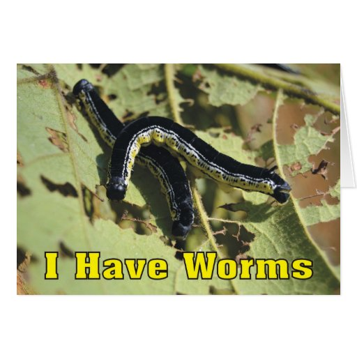 I have worms catalpa worms let 39 s go fishing card zazzle for Let s go fishing xl