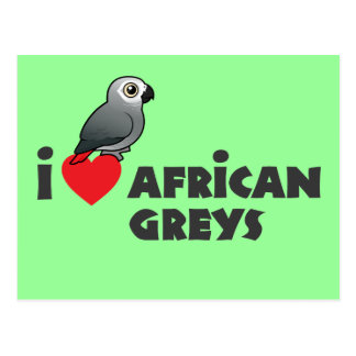 I Heart African Greys Post Cards