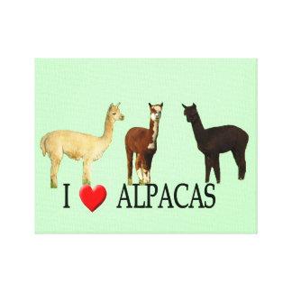 "I ""Heart"" Alpacas Canvas Print"