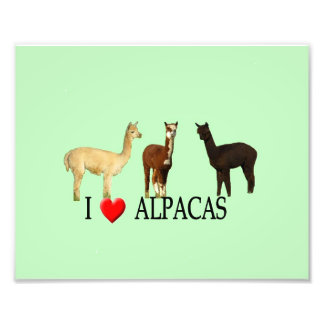 "I ""Heart"" Alpacas Photo Print"
