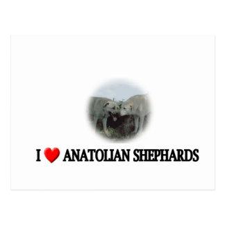 I heart Anatolian shepherds Postcard