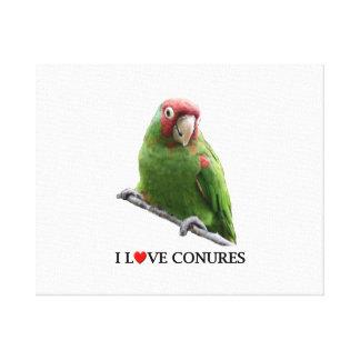"""I """"Heart"""" Conures Canvas Print"""
