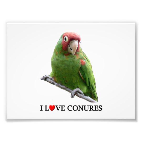 "I ""Heart"" Conures Photo Print"