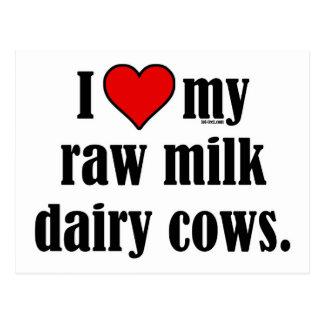 I Heart Cows Postcard