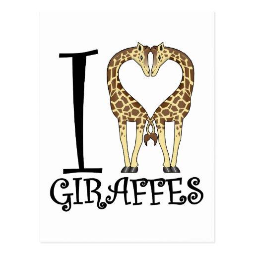 I Heart Giraffes Post Card