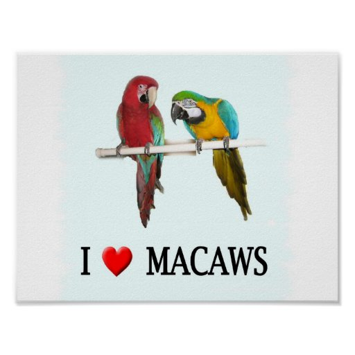 """I """"Heart Macaws Poster"""
