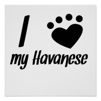 I Heart My Havanese Posters