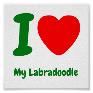 I Heart My Labradoodle Poster