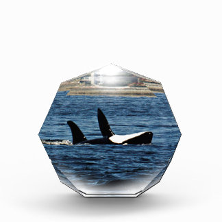 I heart Orcas Killer Whale Belly flop Acrylic Award