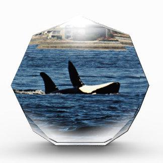 I heart Orcas Killer Whale Belly flop Award