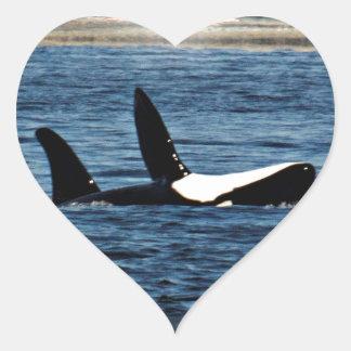 I heart Orcas Killer Whale Belly flop Heart Sticker