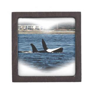 I heart Orcas Killer Whale Belly flop Premium Trinket Box